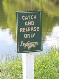 Catch and Release Fishing at Laurel Lake