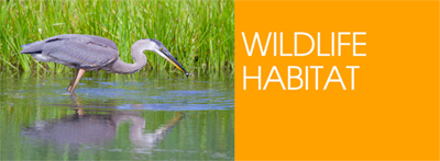 wildlife-habitat